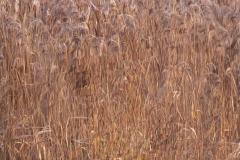 Jos van der Wijst - Abstract - 03