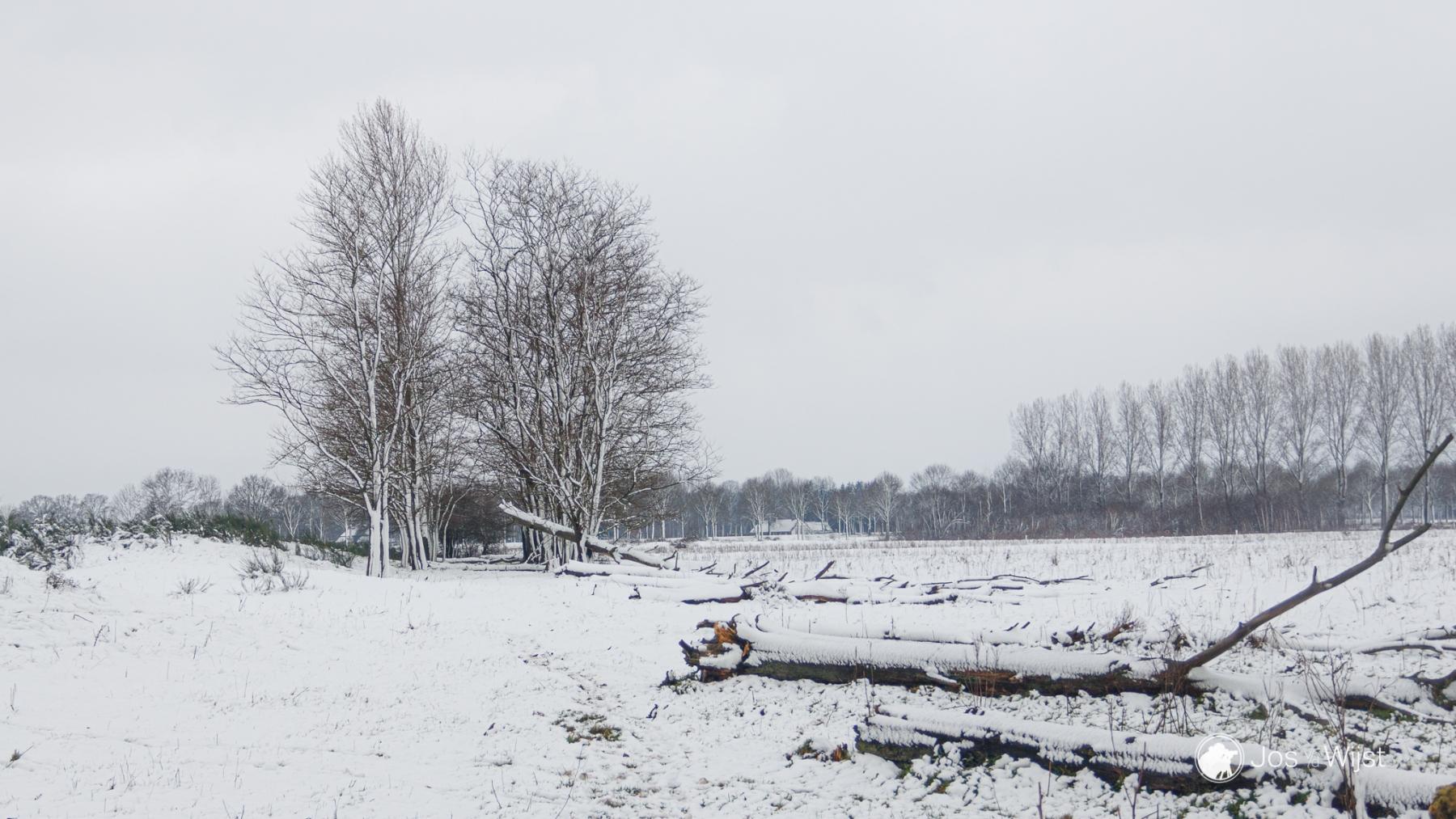 Jos van der Wijst - Thema  winter - 03