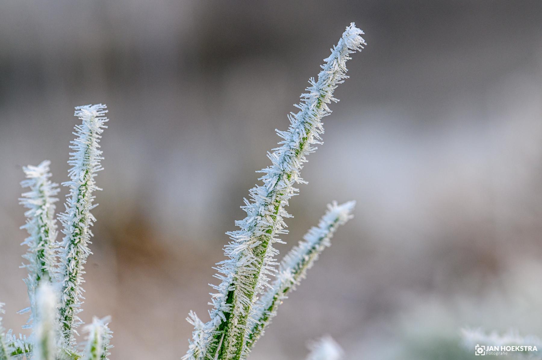 Jan Hoekstra - Winter - 01