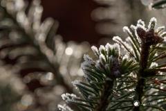 Jos van der Wijst - Thema  winter - 02