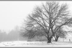 Corrie van Bommel - Winter - 01