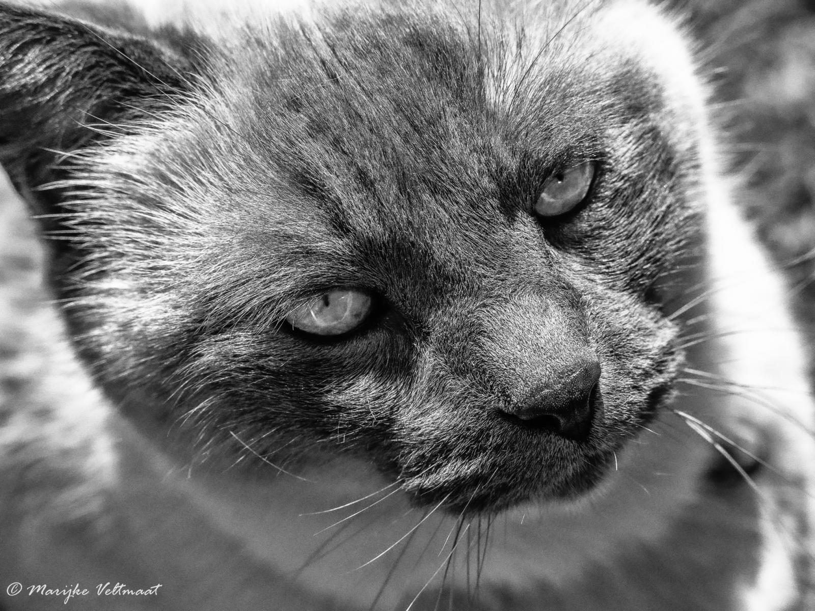 Marijke-Veltmaat-Portret-01